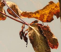 Mantisverycrop